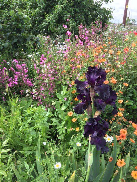 Kirky Garden Display of Flowers